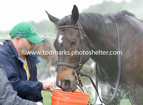 Triple Dip gets a drink after gut-wrenching run in Mason Houghland timber stakes.