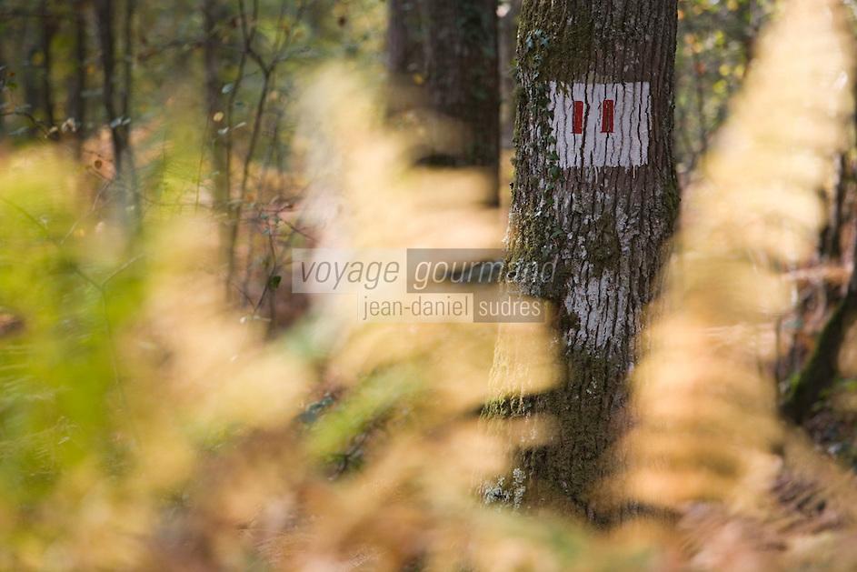 Europe/France/Bretagne/35/Ille et Vilaine/Paimpont: Forêt de Paimpont, mythique Brocéliandre