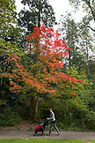 USA, Oregon, Ashland, a woman walks her baby at Lithia Park in the Fall