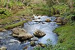 Kawaikoi Stream, Na Pali-Kona Forest Reserve, Kauai, Hawaii