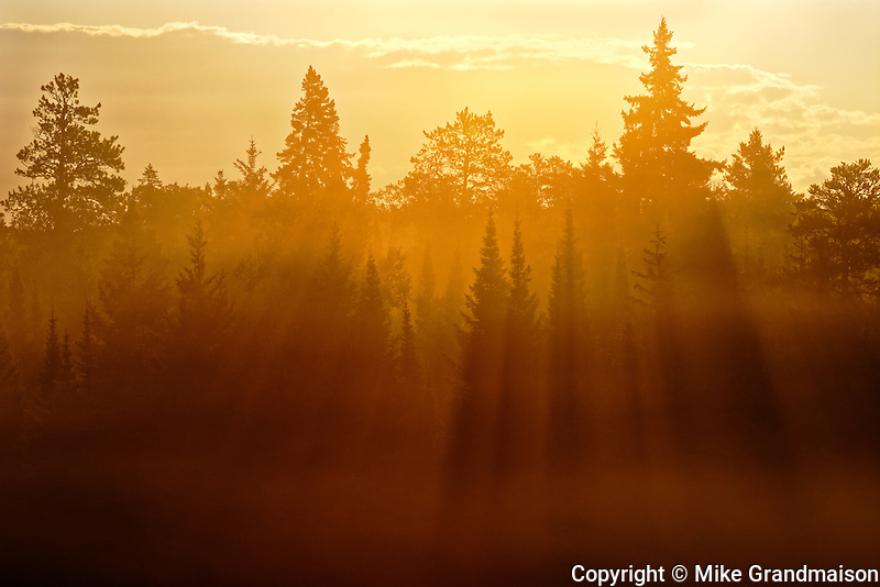 Trees backlit from morning sun throwing strong shadows<br /> Kenora<br /> Ontario<br /> Canada