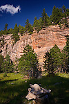 Sandy's Canyon, Coconino National Forest, Arizona