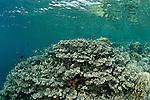 Coral reefs of Bunaken National Park