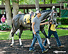 Bryan's Jewel before The Justakiss Stakes at Delaware Park racetrack on 6/5/14