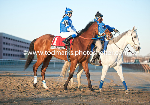 Siete de Oros who has run well in stakes at Aqueduct this winter, is entered in the Gotham.