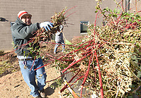 NWA Democrat-Gazette/FLIP PUTTHOFF<br />SCHOOL SPRUCE-UP<br />Merced Cervantes (left) and Genaro Duenas, both with the Rogers School District, trim bushes Wednesday Jan. 3 2017 at Rogers Heritage High School. The two did maintenance near the school's main entrance.