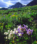 USA, Colorado, Wildflowers in Yankee Boy Basin in the Rocky Mountains