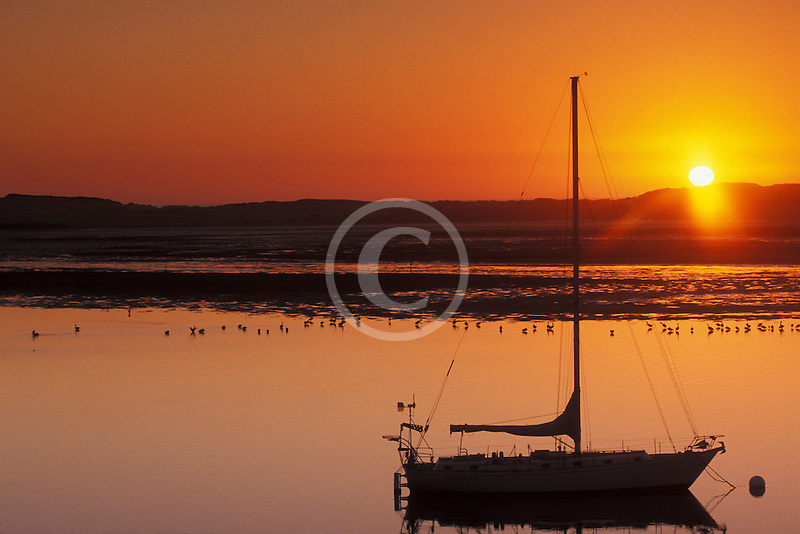 California, Morro Bay, Sailboat at sunset<br />