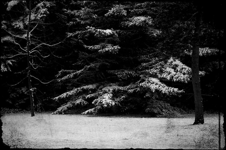 Dark woods in the snow with some snow covered branches and one twisted tree Textured image.