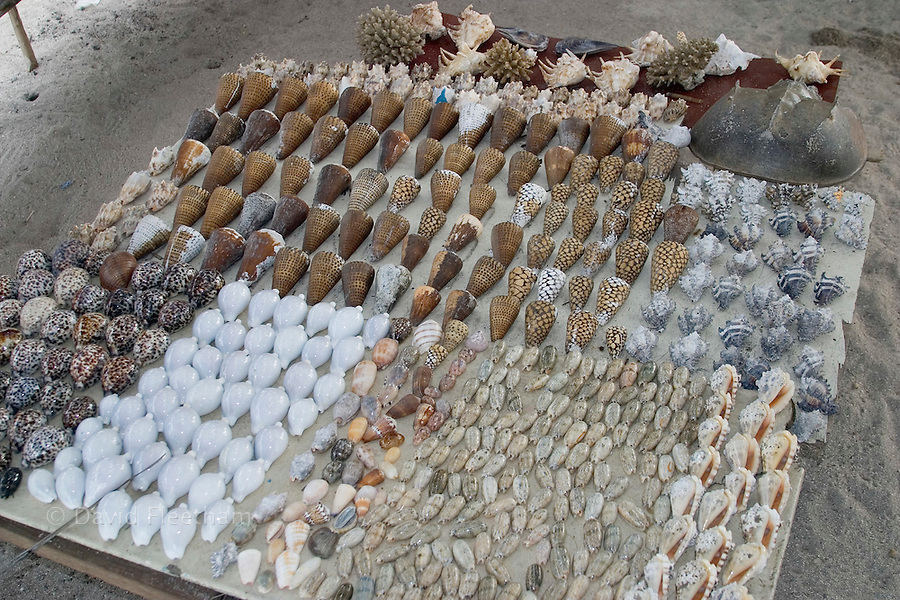 Sea shells for sale in a small village in Malaysia.