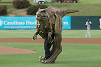Dakota the Dinosaur prepares to throw out a ceremonial first pitch prior to the Kannapolis Intimidators game against the Hickory Crawdads at Kannapolis Intimidators Stadium on April 22, 2017 in Kannapolis, North Carolina.  The Intimidators defeated the Crawdads 10-9 in 12 innings.  (Brian Westerholt/Four Seam Images)