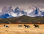 Horses roaming freely below the Cuernos del Paine at Torres del Paine National Park, southern Chilean Patagonia