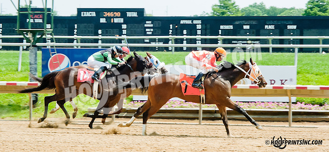 Echo Bye winning at Delaware Park on 6/12/13