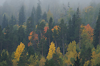forollhogna national park , norway, september,