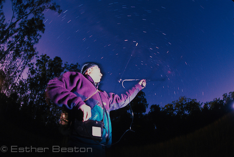Researcher radio-tracking owl with star trails in sky above. Whiporee State Forest, northern NSW