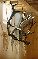 A row of antlers found in the woodlands around the house
