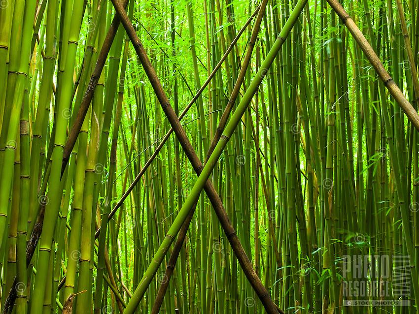 "A large ""X"" of fallen bamboo trees above the Pipiwai trail at Haleakala National Park, Maui."