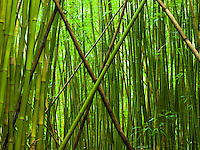 "A large ""X"" of fallen bamboo trees above the Pipiwai trail at Haleakala National Park, Maui."