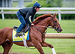 LOUISVILLE, KENTUCKY - APRIL 30: Plus Que Parfait, trained by Brendan Walsh, exercises in preparation for the Kentucky Derby at Churchill Downs in Louisville, Kentucky on April 30, 2019. Scott Serio/Eclipse Sportswire/CSM