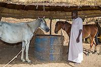 Senegalese Farmer and his Horses.  Bijam, a Wolof Village, near Kaolack, Senegal.