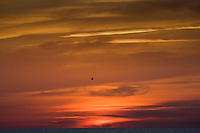 Bird flying at sunset over the Gulf of Mexico from Anna Maria Island, Florida, United States of America