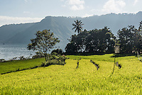 Terraced rice paddy fields at Lake Toba (Danau Toba), North Sumatra, Indonesia