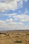 Israel, Shephelah, Hurvat Rimon by Lahav Forest