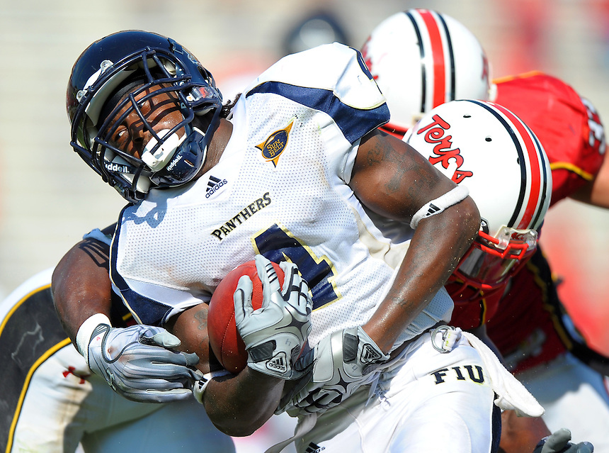 Wayne Times of FIU is brought down by a Terrapin defender.   Maryland defeated FIU 42-28 during a game at Capital One Field at Byrd Stadium in College Park, MD on Saturday, September 25, 2010. Alan P. Santos/DC Sports Box