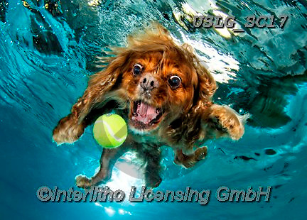 REALISTIC ANIMALS, REALISTISCHE TIERE, ANIMALES REALISTICOS, dogs, paintings+++++SethC_Buster_320B2065rev2CROP,USLGSC17,#A#, EVERYDAY ,underwater dogs,photos,fotos ,Seth