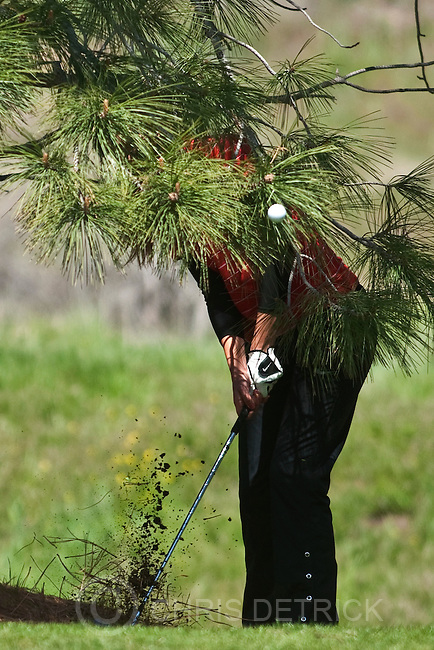 Photo by Chris Detrick | The Salt Lake Tribune .Alta's Hannah Herman hits out of the trees on the fourth hole during the 5A Girls Golf High School State Championship at Glenmoor Golf Course Wednesday May 11, 2011.