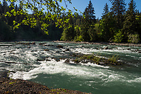 Hoh River, Olympic Peninsula, Washington.  May.