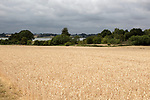 Field of golden ripe wheat crop under overcast grey sky, River Deben valley, Sutton, Suffolk, England, UK