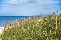Dune grass and beach.