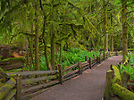 Vancouver Island, British Columbia, Canada: Cathedral Grove trail through old Growth forest, MacMillan Provincial Park