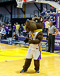University at Albany men's basketball defeats Binghamton University 71-54  at the  SEFCU Arena, Feb. 27, 2018. Great Danes mascot, Damien. (Bruce Dudek / Cal Sport Media/Eclipse Sportswire)