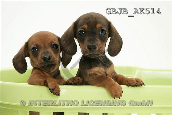 Kim, ANIMALS, fondless, photos(GBJBAK514,#A#) Tiere ohne Fond, animales sind fondo