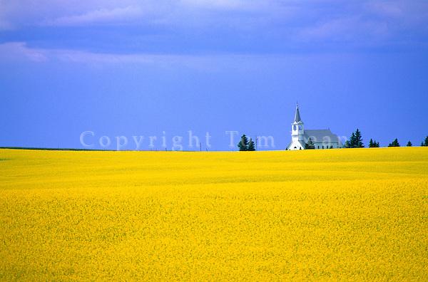 Country church, Keene First Lutheran Church, amid field of blooming canola, near Keene, North Dakota, AGPix_0065.