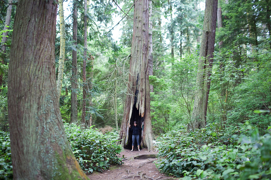 A woman stands inside of a hollowed out tree trunk in the forest at Deception Pass State Park, WA, USA.