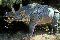 "Pre-historic Animals:  ""Sabertooth Rhino"" Eobasileus, late Eocene. 22 million years ago. A ""dawnbeast""--extinct order of mammals. No physiological similarity to rhinos."