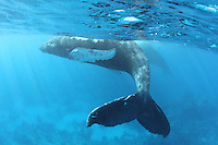 Humpback_Whale_tail