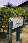 Demo vines, Edna Valley Vineyards, Edna Valley, near San Luis Obispo, San Luis Obispo County, California
