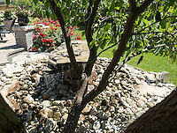 Beautiful Yards <br /> Beverly Martin<br /> 227 Algonquin Court<br /> 519-383-1393<br /> bmartin227@icloud.com<br /> <br /> The garden is just five years old.  It began with the hardscape, foundation planting, and the installation of eight mature trees. An elevated wooden deck was replaced with a paved patio. <br /> A water table was added as a focal point that provides a sense of serenity. <br /> An assortment of Perennials give the garden a year round palette of colour. <br /> Seclusion is enhanced by the adjoining Howard Watson trail.