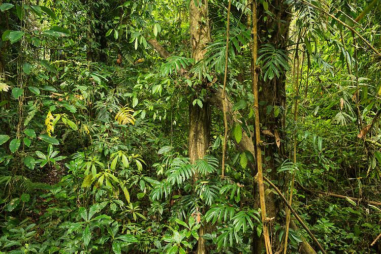 Primary rainforest area of the Xishuangbanna Tropical Botanic Gardens