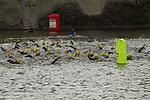 2014-06-28 Leeds Castle Sprint Tri 20 SB