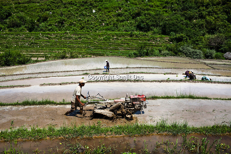 Bhutanese workers help each other in their community and here they are seen planting paddy in fields just outside of Punakha, Bhutan. Photo: Sanjit Das/Panos