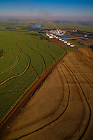 Aerial view of Sao Martinho ethanol and sugar plant - ethanol storage tanks in the background, sugarcane plantation at left and plowed land at bottom right - Pradopolis city in Ribeirao Preto region, Sao Paulo State, Brazil.