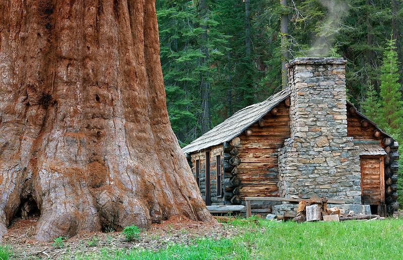 Mariposa Grove Museum with giant Sequoia Redwood trees. Yosemite National Park, California