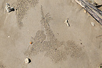 Sand shapes made by crabs sandy tropical beach Bubble Crab, Scopimera, patterns, Sri Lanka, Asia