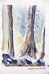 Fir trees, Deception Pass, Journal Art 2004