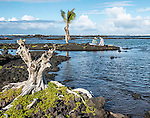Tide pools on the southeast coast of the Big Island of Hawaii, formed by lava flows, at Kapoho.
